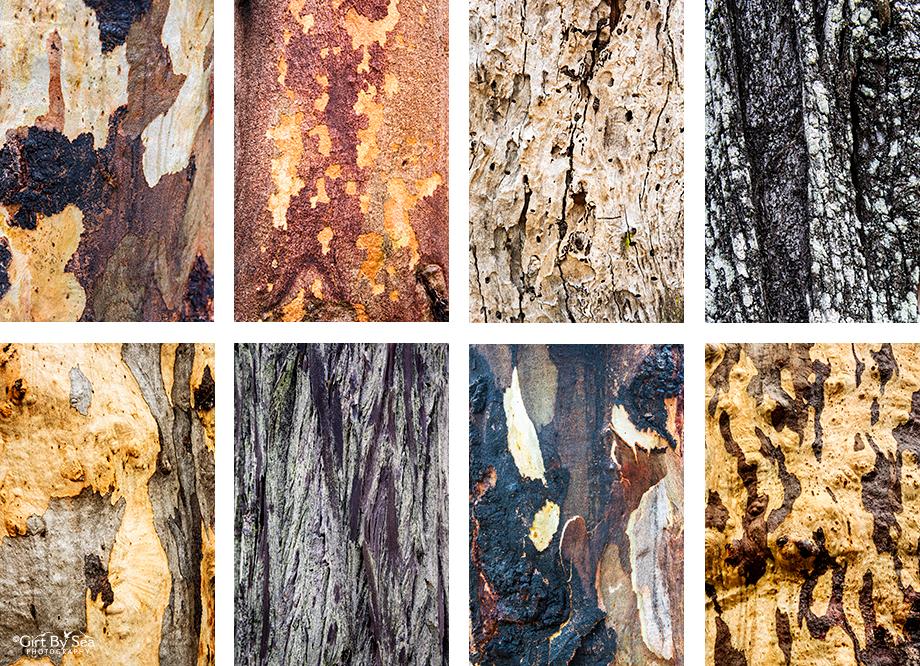 Goonoowigall Trees, Inverell